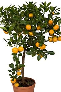 """Символ удачи в """"Твоем Доме"""" - подари себе новое, мандариновое"""