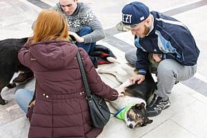 Purina и ЂЁгидаї помогли найти семью 19 бездомным животным