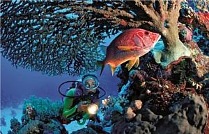 Тайны морских глубин в Viceroy Maldives