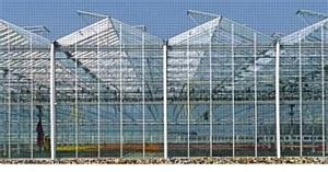 Производственное планирование выращивания тепличных овощей и зелени. Часть I. Площади выращивания