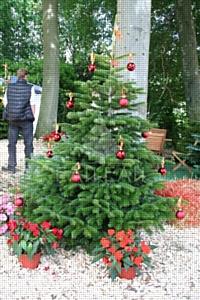 Датские живые елки – тренд Нового 2014 года
