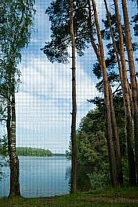 Расходы москвичей на дачную аренду сопоставимы со стоимостью приобретения загородной недвижимости