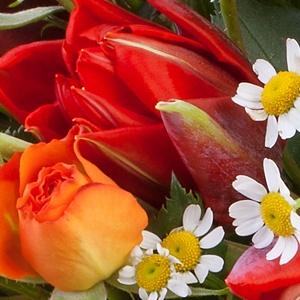 """����������� �������� ������ """"Madam De Fleur"""" � ������ ��� ��������, ���� ��� ����"""