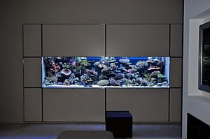 Морской рифовый аквариум. Рекомендации дизайнерам.
