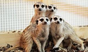 В Москве открывается новый контактный зоопарк