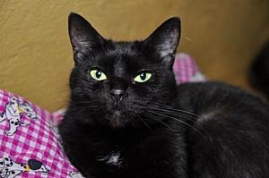 Раздача цветных котиков в «Республике Кошек»