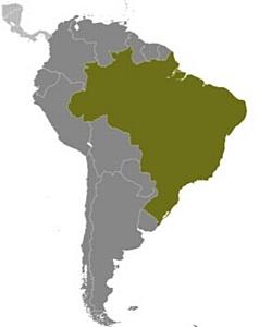Завтра начинается здесь: при участии Cisco в Бразилии осуществляется программа «Здоровые дети»