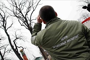 """Всероссийская программа """"Деревья-памятники живой природы"""" продолжает свою работу"""