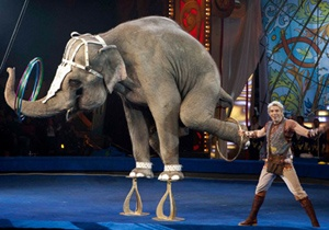 Легендарный аттракцион индийских слонов Андрея Дементьева-Корнилова приедет на гастроли в Москву