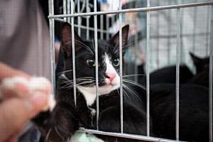 Во Всемирный день защиты животных Purina и «Эгида» помогли питомцам из приютов найти семьи