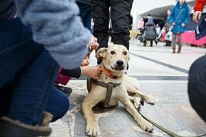 Purina и «Эгида» помогли найти семью 19 бездомным животным
