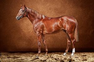 Лизинговые предложения востребованы и в отрасли коневодства