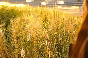Carlsberg Group поделился лучшими практиками с российскими аграриями