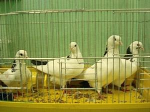 Пресечена попытка незаконного ввоза птиц на территорию РФ.