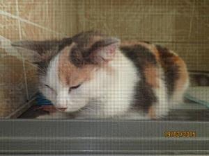 Барнаульская кошка решила покататься под капотом