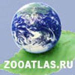 ZooAtlas нашел место и муравью, и крокодилу