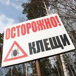 Алтайский край готовится к началу сезона клещей