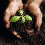 В России начата биологическая очистка земли в промышленных масштабах