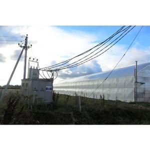 Удмуртэнерго обеспечило электроснабжение тепличных комплексов в Завьяловском районе Удмуртии