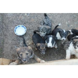 Тюменские активисты ОНФ посетили новое место содержания бездомных собак в Тобольске