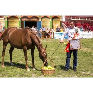 Сбербанк – генеральный партнер Дня открытых дверей Терского племенного конного завода