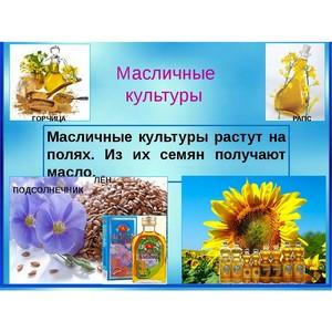 Декларирование масличных на юге России набирает популярность