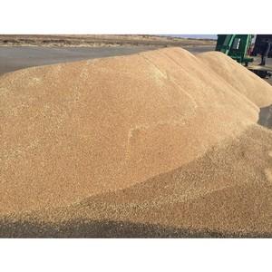 Экспорт зерна, пшеницы, ячменя, льна, рапса, нута, муки, зерновых и масленичных культур