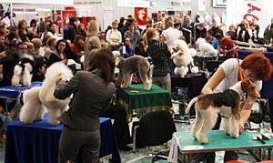 Конкурс грумеров ZooGroom на выставке Pet Vet Russia Expo 2013