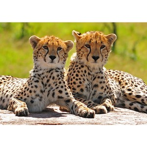 Volmar Safaris ���������� �������� - �������� (Cape Town) ���