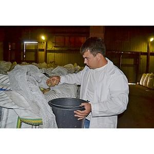 Около 1,5 млн. тонн подкарантинной продукции обследовано на Дону в сентябре 2016 года