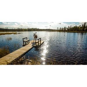 Антикризисный отдых: природный туризм в национальных парках Финляндии
