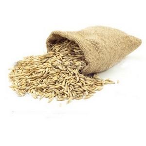 О высеве семян озимой пшеницы без проверки на сортовые и посевные качества