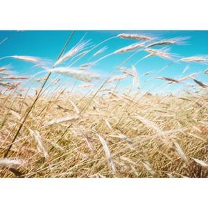 В Эртильском районе семена хранились насыпью