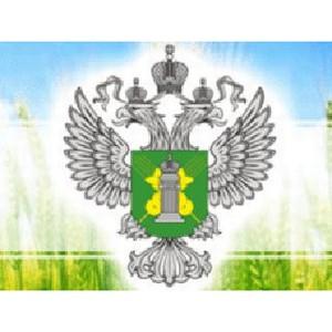 В хозяйстве Таловского района Воронежской области не проводились фитосанитарные обследования