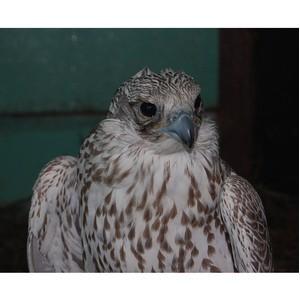 Вынесен приговор по уголовному делу по фактам контрабанды особо ценных диких животных