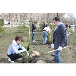 Активисты ОНФ Мордовии высадили в Саранске более 100 сосен