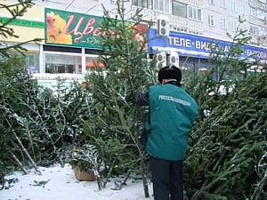 Выявлены нарушения при ввозе новогодних деревьев на территорию Новосибирской области.