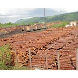 Комитетом проверено восемь предприятий, занимающихся приемом и отгрузкой древесины