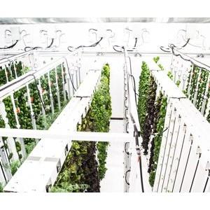 Венчурный фонд «ТилТех Капитал» инвестировал в сити-ферму