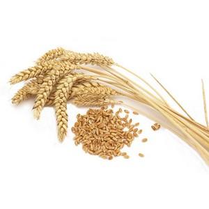 Итоги  в сфере  качества и безопасности зерна за первое полугодие 2014 года