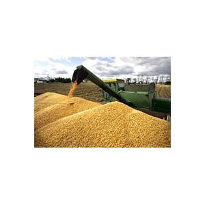 Сельхозпродукцию без сорняков везут не все