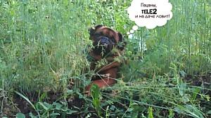 Туляки подтверждают: Tele2 прекрасно ловит на даче