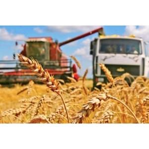 Сбор урожая ранних зерновых в Ростовской области подходит к концу