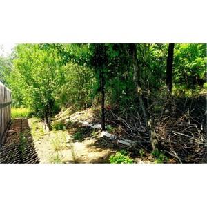 Активисты ОНФ проверяют законность вырубки деревьев в садоводческом товариществе Благовещенска