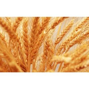 В ООО «Агро-Гарант» хранили семена ячменя ненадлежащим образом