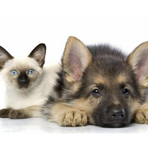 Правила транспортировки домашних животных по России и странам СНГ