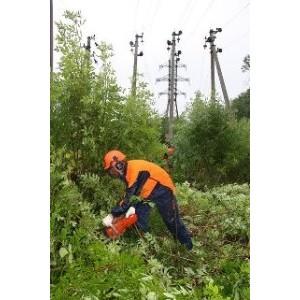 Расчистка просек линий электропередачи на особом контроле Липецкэнерго