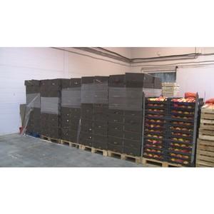 Почти 4,5 тонны санкционных яблок выявили сотрудники Приволжского таможенного управления