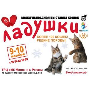 «М5 Молл»: впервые в Рязани – шоу сибирских кошек!