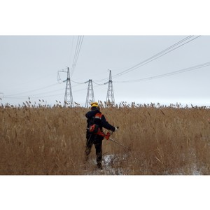 ФСК ЕЭС расчистит свыше 280 га трасс линий электропередачи на Юге России от зарослей камыша